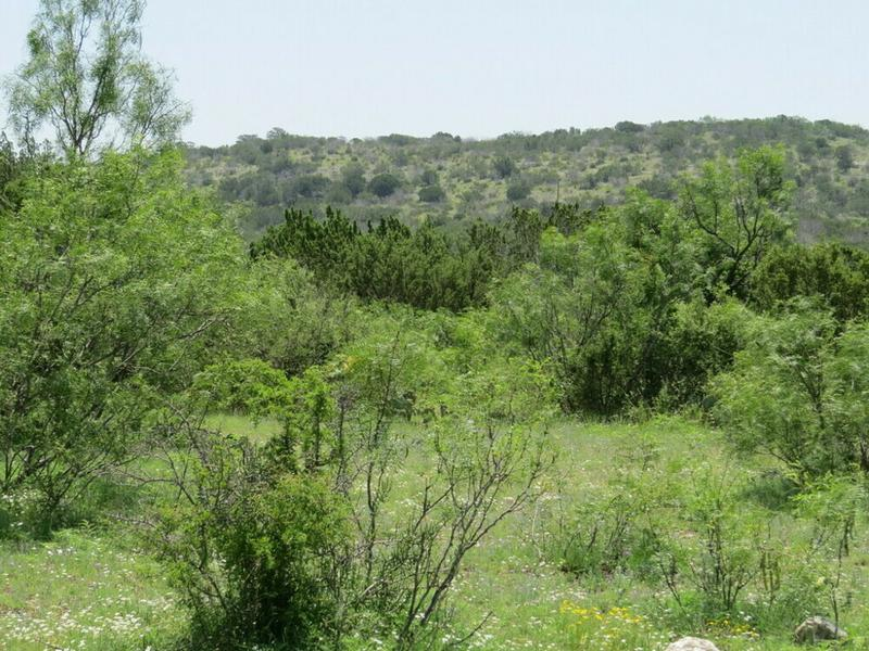Dolan Creek Ranch - Whitetail, Exotics - 5% Down in Del Rio, Val Verde County, Texas