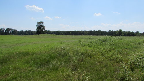 1250 Acres in Bowie County in De Kalb, Bowie County, Texas