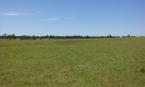 415 Acres in Bowie County in De Kalb, Bowie County, Texas