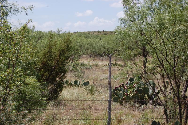 131.48 acres in Roscoe, Nolan County, Texas