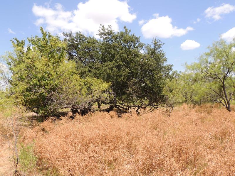 280 +/- Acres McCulloch Co. in Brady, Mcculloch County, Texas