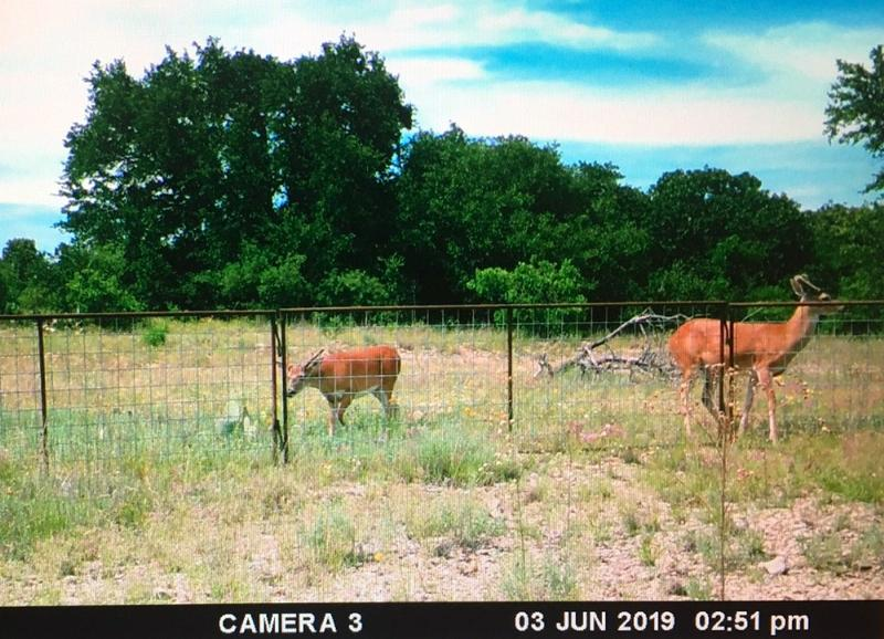 149.48 acres in May, Brown County, Texas