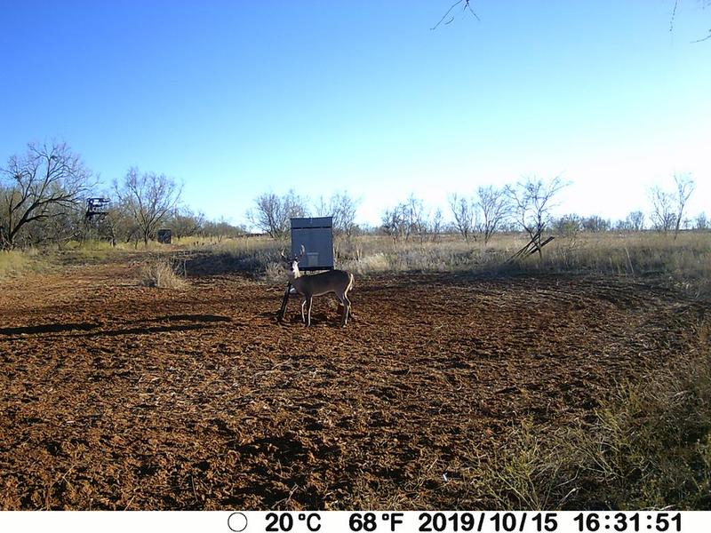 For Sale in Fisher County, Rotan, Texas